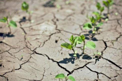 agriculture-climat-maroc