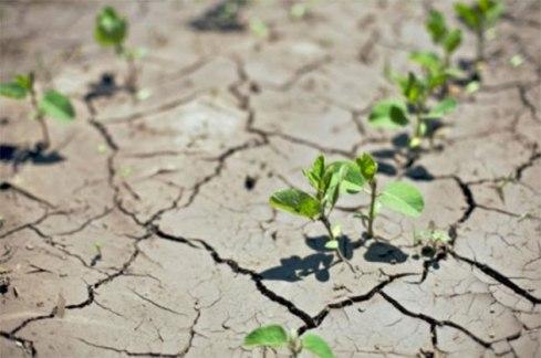 agriculture-climat-maroc